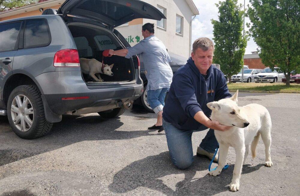 MEIE MAA | Saaremaal päästeti taas kaks koera