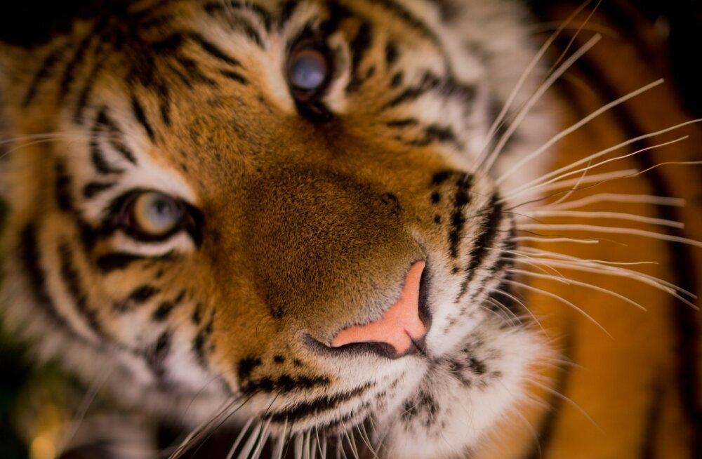 ÜRITUS | Loomaaed ja Ameerika saatkond kutsuvad põnevale kinoõhtule