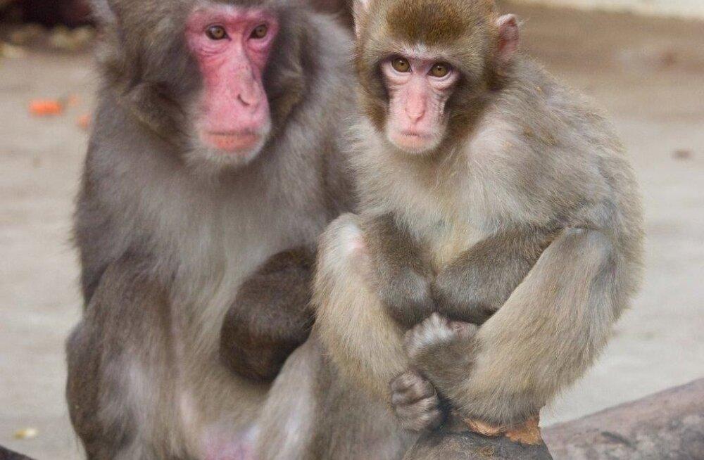 Jaapani makaagid Tallinna Loomaaias