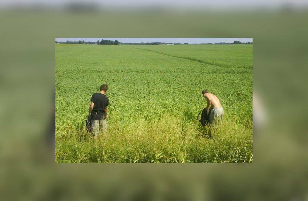 Euroopa põllupidajate päritolu saladus lahendatud