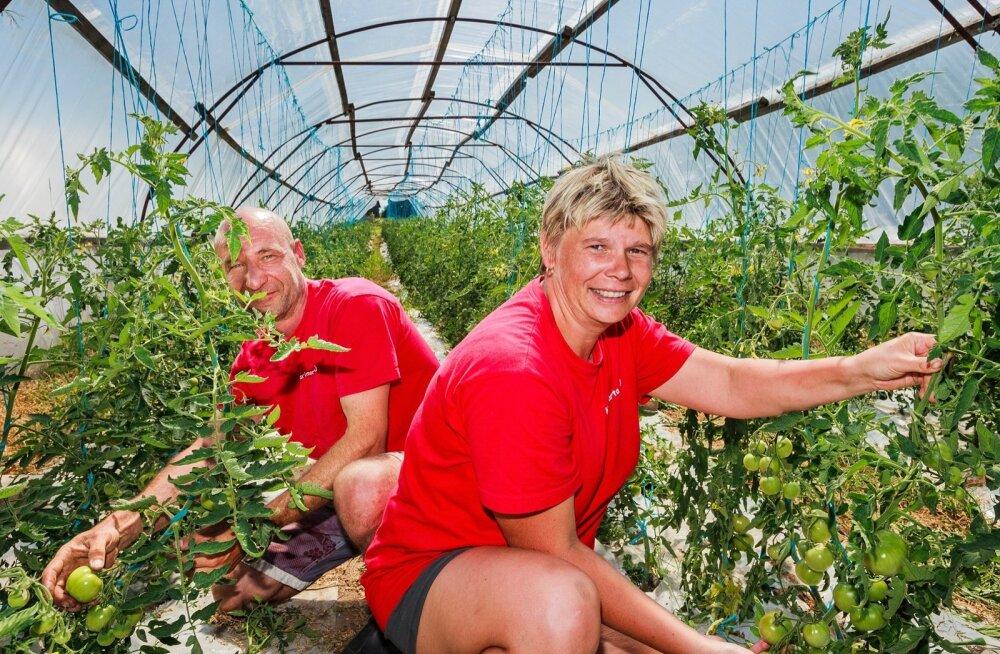 Janika ja Margus Lindsalu kasvatavad tomateid, et teha neist viljalihaga mahla.Oma tööd näitavad nad .