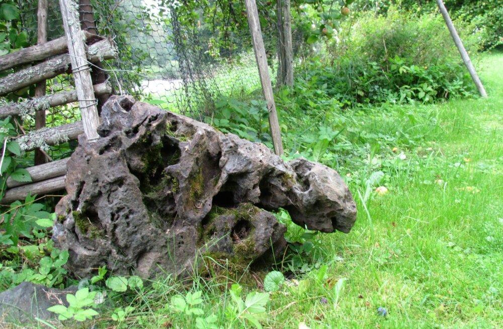 Leili metsalood | Vana mees ja tema künnapuu