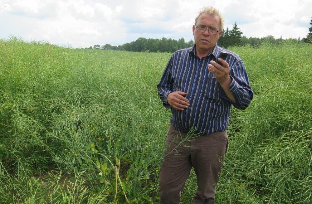 Tänavu saadi kõige rohkem tulu rapsist, mille hind võrreldes teravilja omaga on vähem langenud. Urmas Uustalu taliraps 'Extorm' andis kasumit üle 1500 euro hektari kohta.