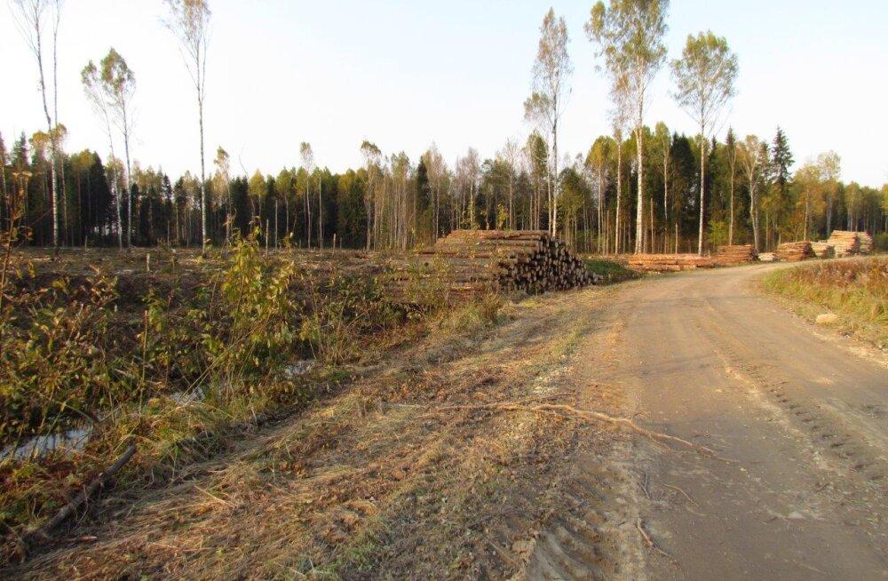 Kas Eestis on vaid üks mets?