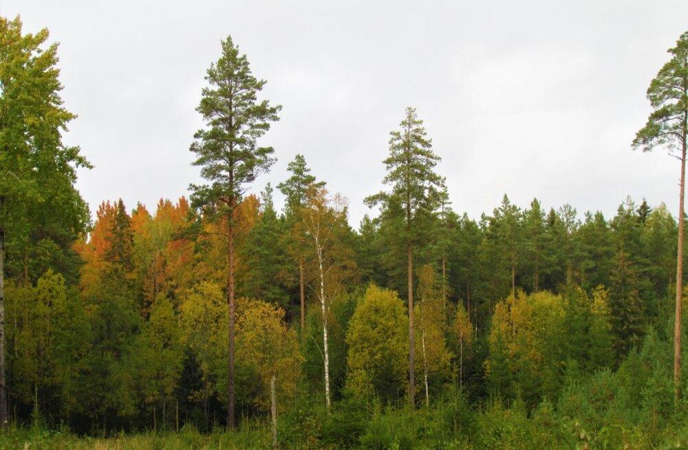 Leili metsalood | Oktoobri värvid
