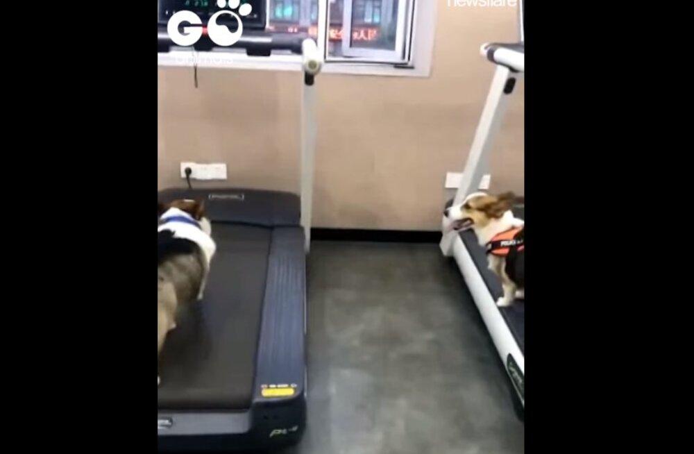Naljakas VIDEO | See koer juba teab, et elus läbilöömiseks on vaja nutikust, mis sa ikka mõttetult oma energiat raiskad