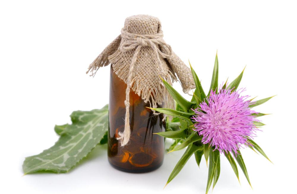 Maarjaohakas on tõhusaim ravimtaim maksale ja tervele organismile