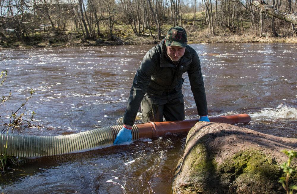 ФОТО | В реку Пуртсе выпустили 15000 мальков лосося