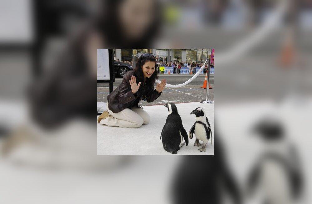 Video: Linux ja lendavad pingviinid
