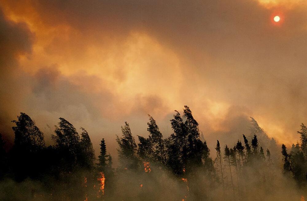 Arktika hädas suurpõlengutega: tuli laastab Siberit, Skandinaaviat ja Alaskat. Hävis mitu miljonit hektarit metsa
