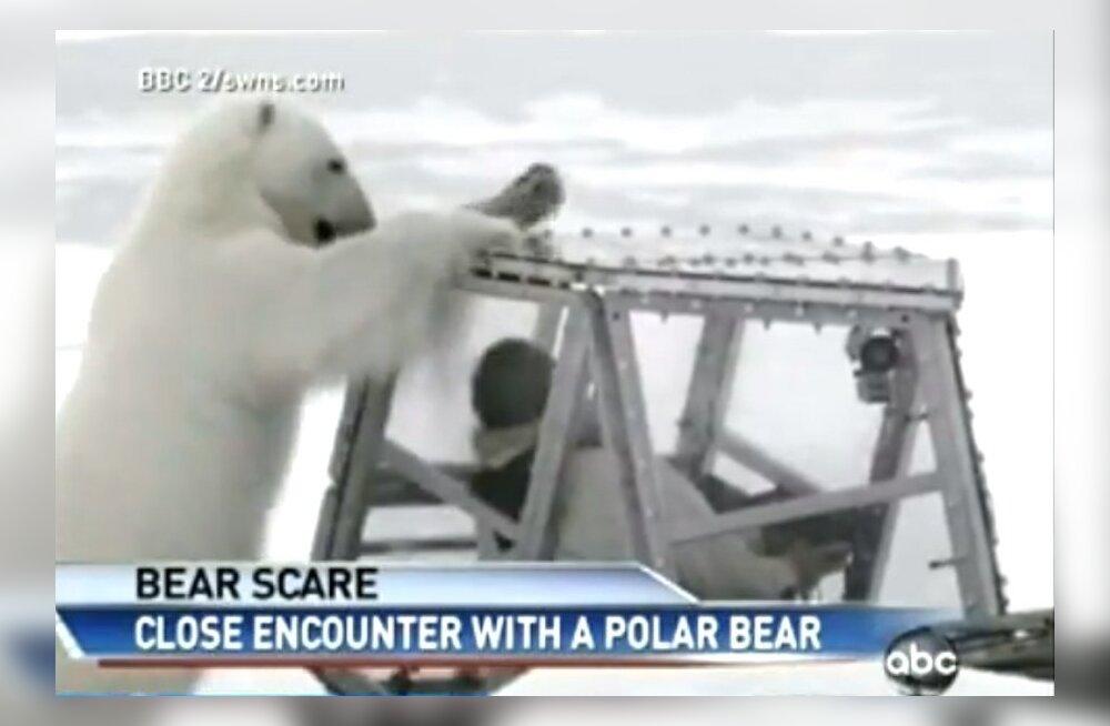 VIDEO: BBC fotograaf nägi jääkaru lähemalt, kui vaja: kõige kohutavamad 45 minutit mu elus