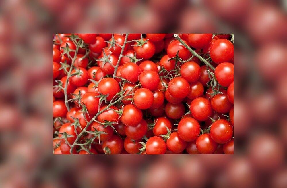 Tomatid