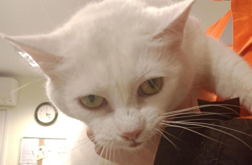 VIDEO | Varjupaigast koju pääsenud kass täidab kuulekalt käsklusi