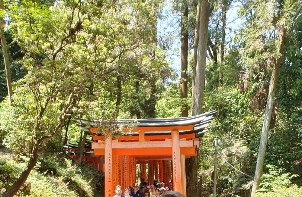 KAKS KANGET kimonotes Kyōtos.
