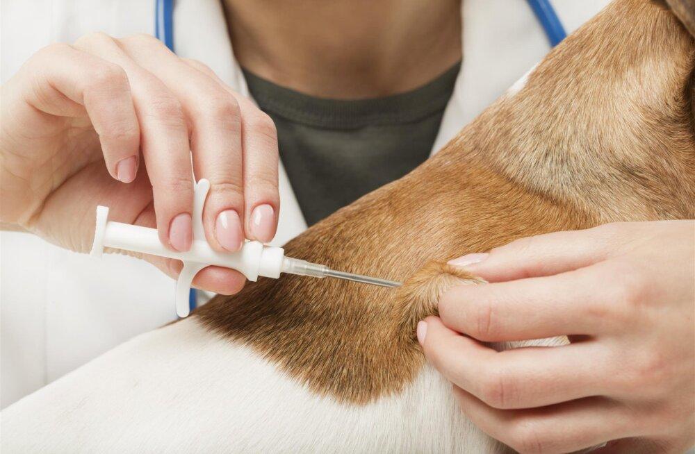 5 põhjust, miks on lemmikloomade kiipimine ja registreerimine vajalik