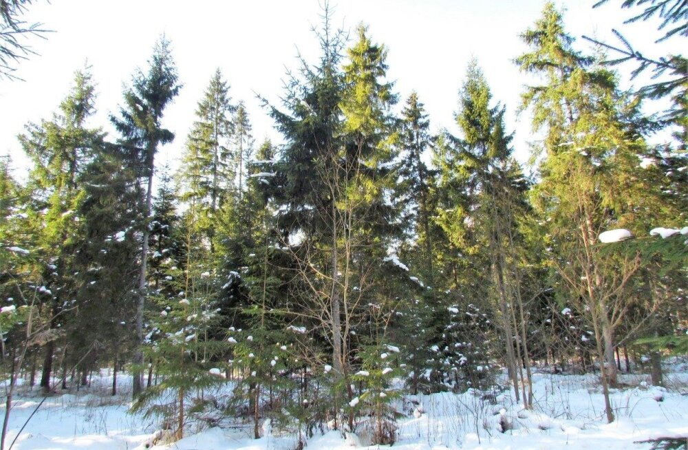 Leili metsalood | Talupojatarkusest metsas