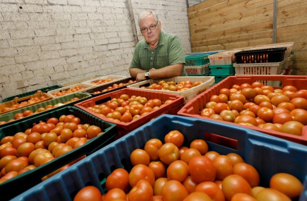 Suurim tomatikasvataja müüb firma maha: odav importtomat seab kohalikud keerulisse seisu