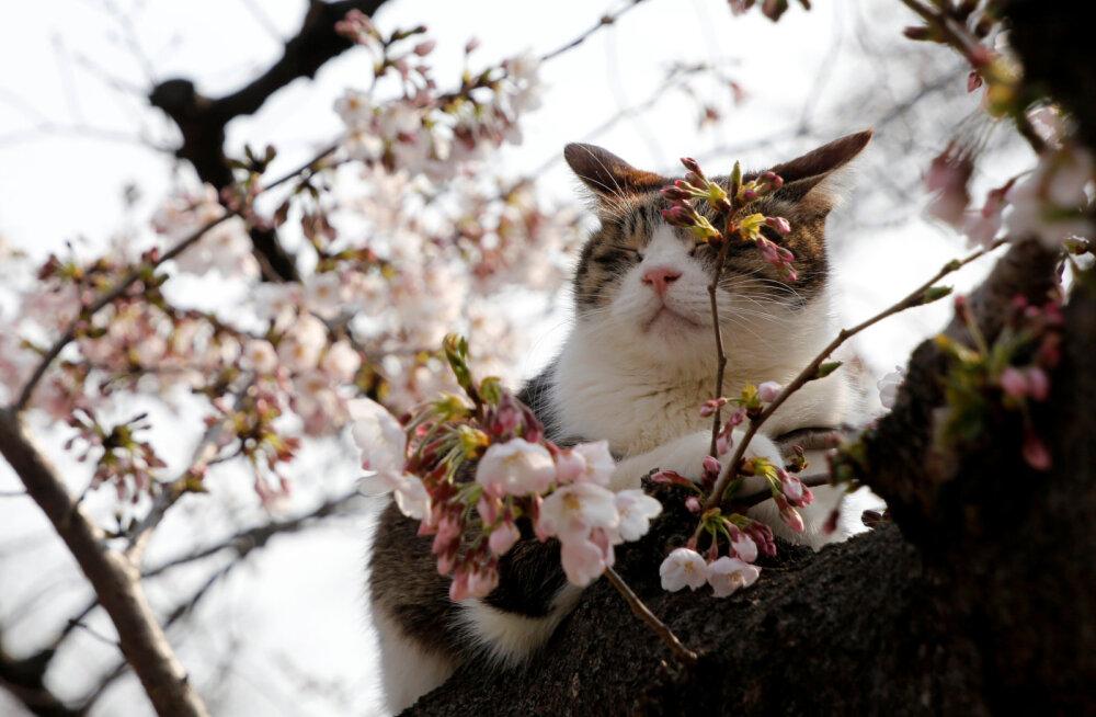 Эх, хорошо, что весна! Одна извечная русская проблема, пущенная на самотек, испарится