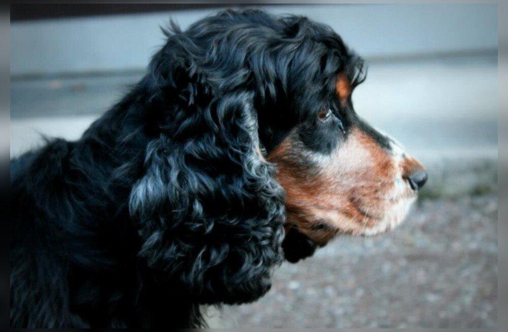 Hingedepäeval mineviku radadel: esimesel koeral on hinges alati väga eriline koht