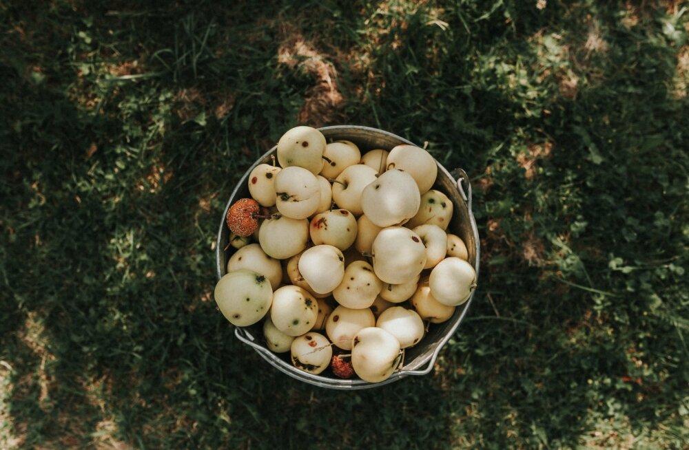 Septembrikuu aiatööd ehk kõik, mis tuleks ära teha, et su taimed talve üle elaksid