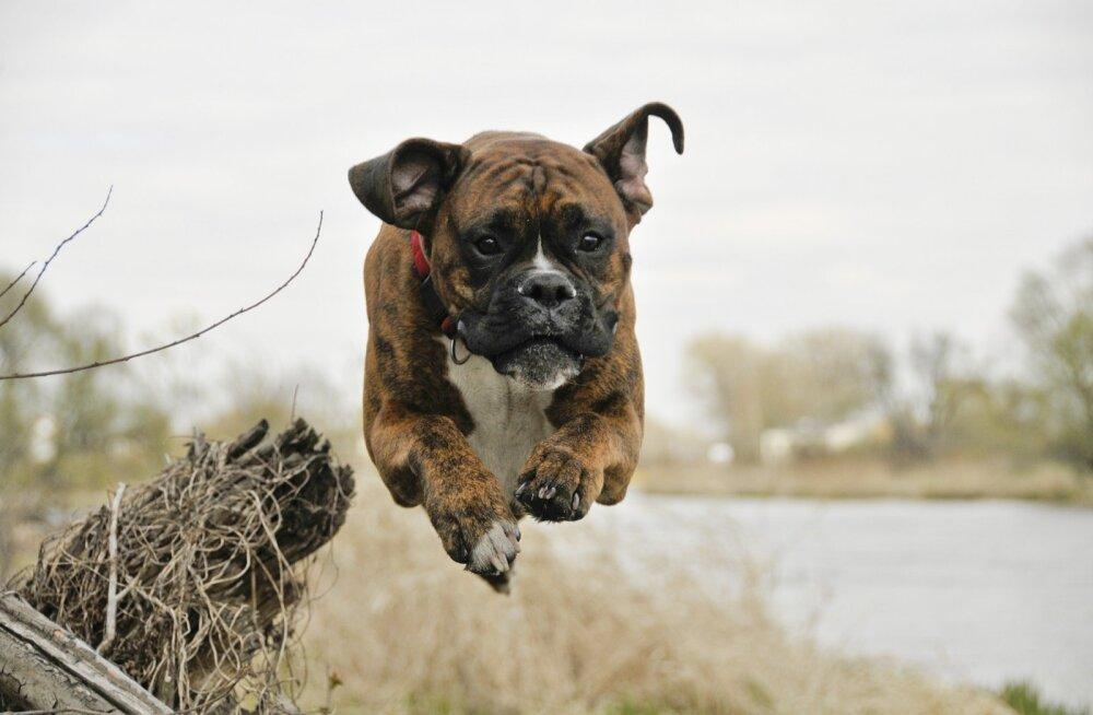 TOP 7 | Loomaarst juhib tähelepanu ohtudele, mis varitsevad lemmiklooma soojade ilmade saabudes