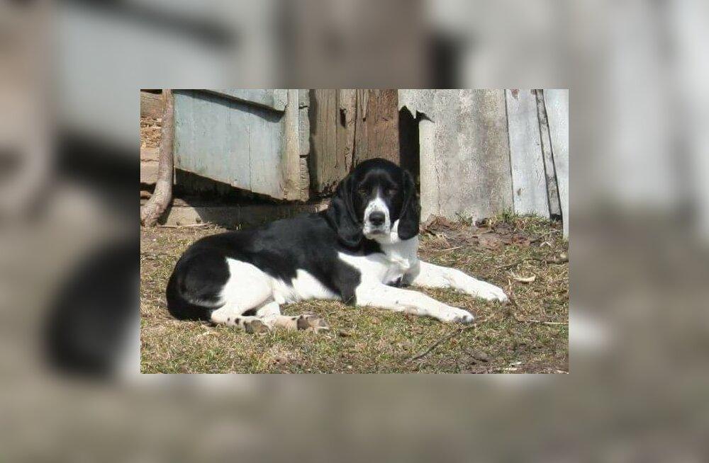Kingi elu: kaks väärikas eas koera vajavad hädasti armastavaid kodusid