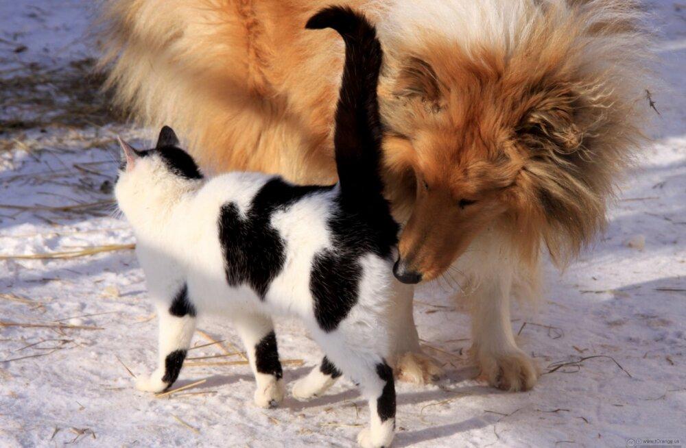 Hämmastav! Koer suudab nina abil tajuda omaniku emotsioone