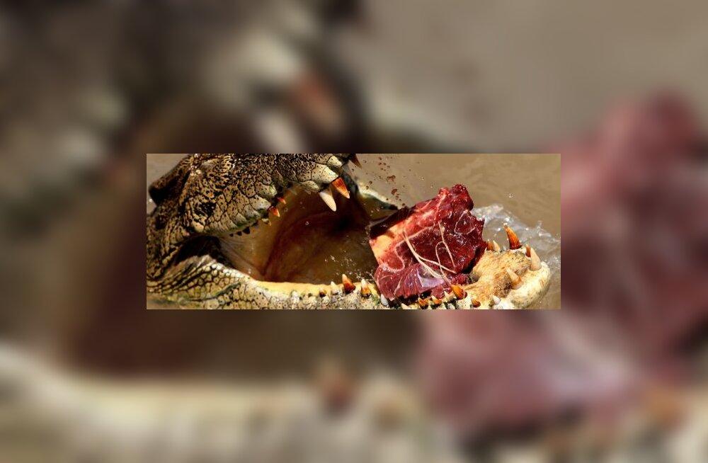 Itaalia mafiooso pressis raha välja krokodilli abil