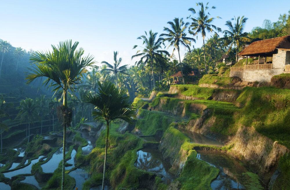 Juba homme! Indoneesia reisihommik tutvustab Bali paradiisisaart
