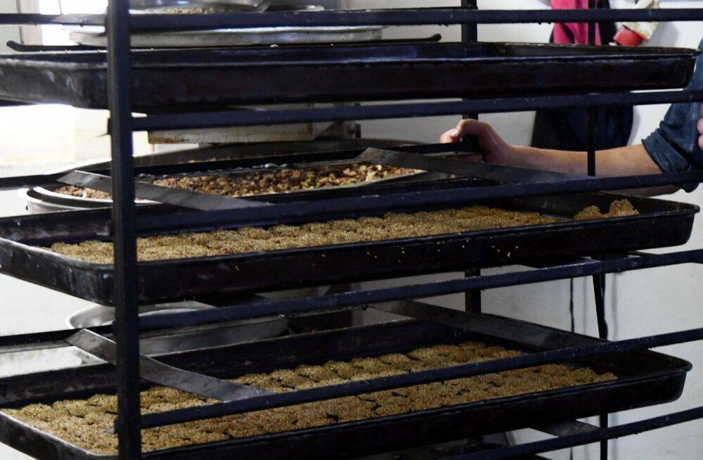 Eestiski müüdavaid Adugsi küpsiseid toodeti Lätis orjatööga