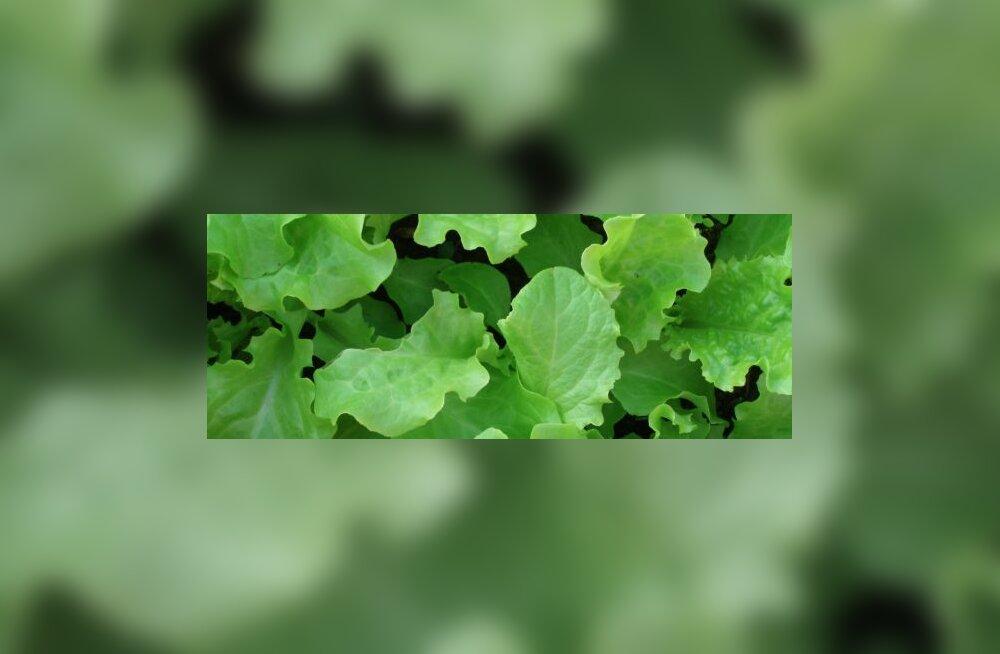Teeme kevadel rohelisi suppe
