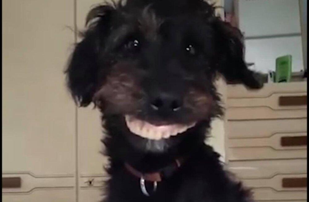NALJAKAS VIDEO | Koer näppab perenaise hambaproteesid ning naeratab nendega