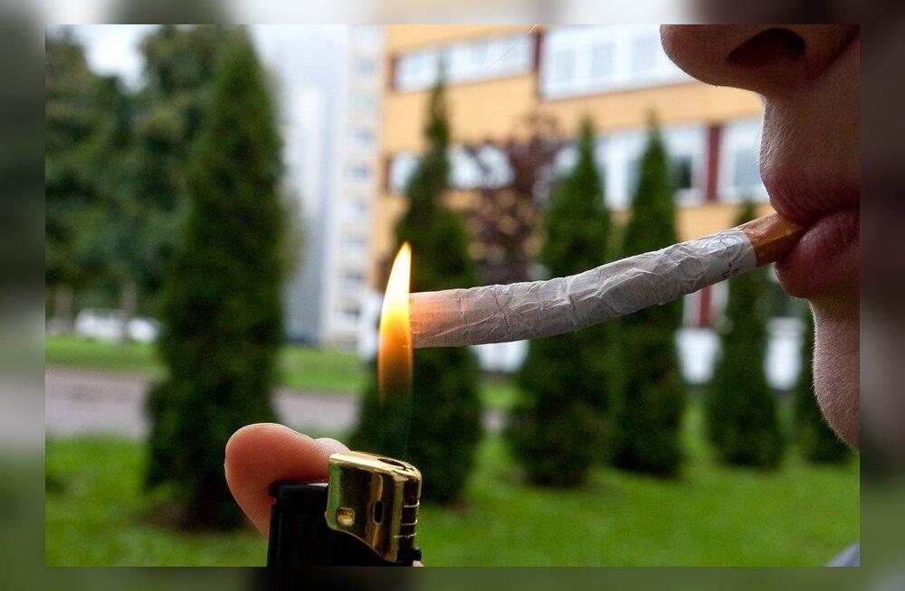 Firmaomanik: kanep tuleb legaliseerida
