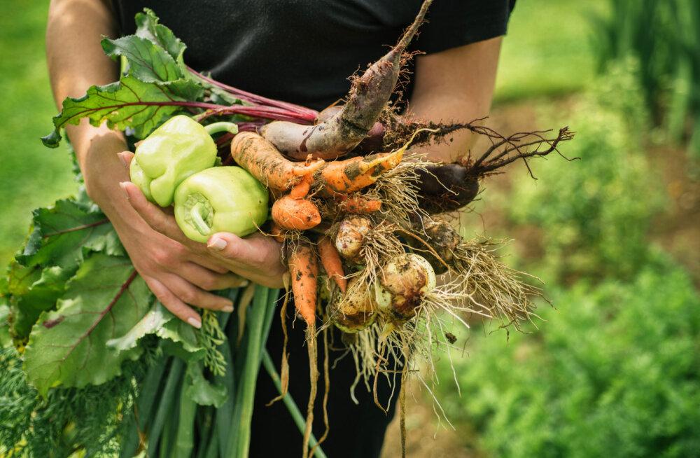 6 põhjust, miks veganlus võiks olla lahendus globaalsele keskkonnakriisile