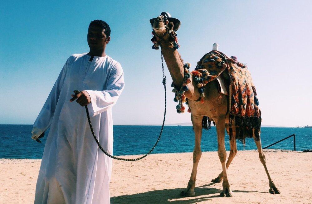 Egiptuse kohalikud