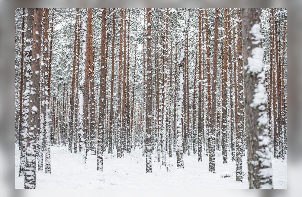 Lumine talv