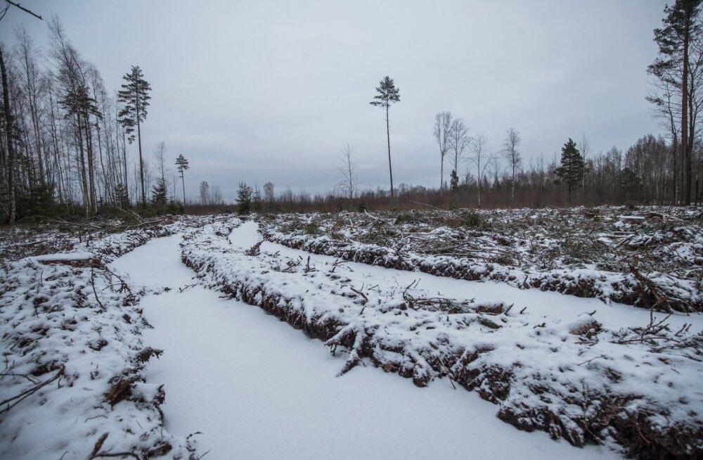 Õhukese lumekihi all on maa metsaveomasinate jaoks läbimatu.