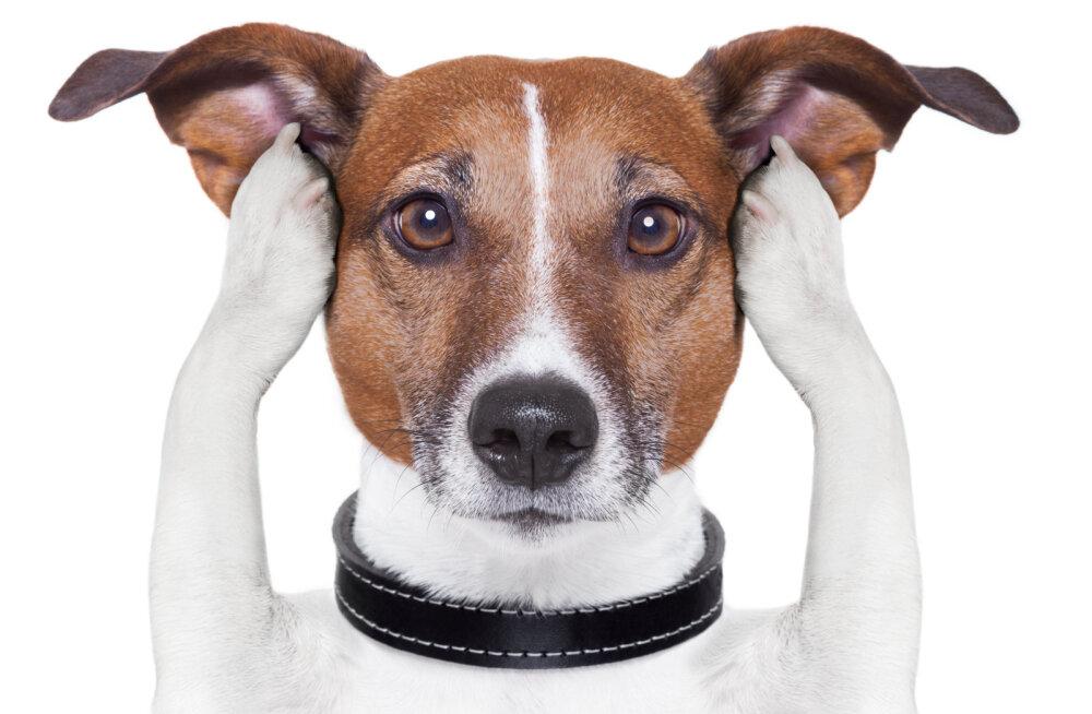"""Nõuanded, kuidas õppida oma koerale """"ei"""" ütlema"""