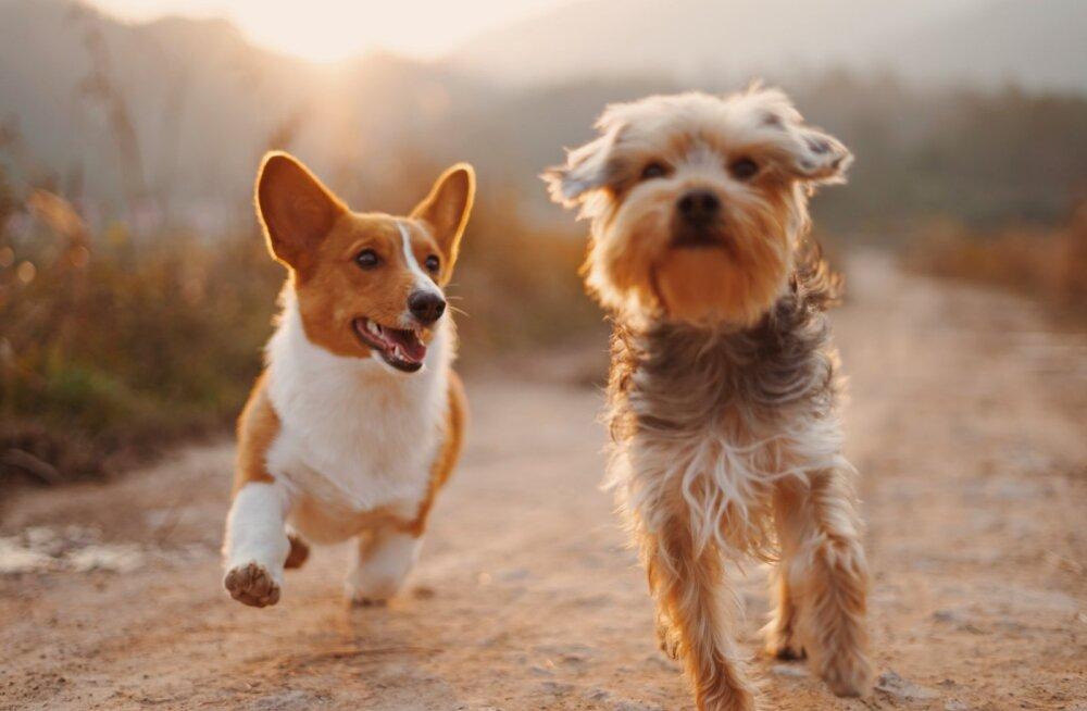 Порода собак, которая подойдёт вам по знаку Зодиака