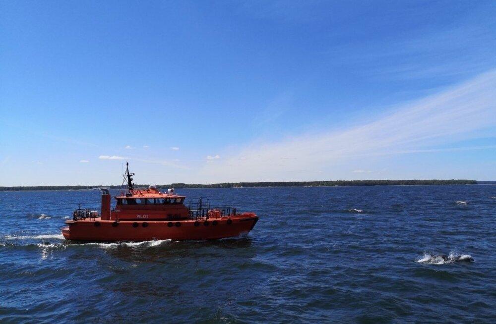 ФОТО | Бутылконосые дельфины добрались до Таллинна
