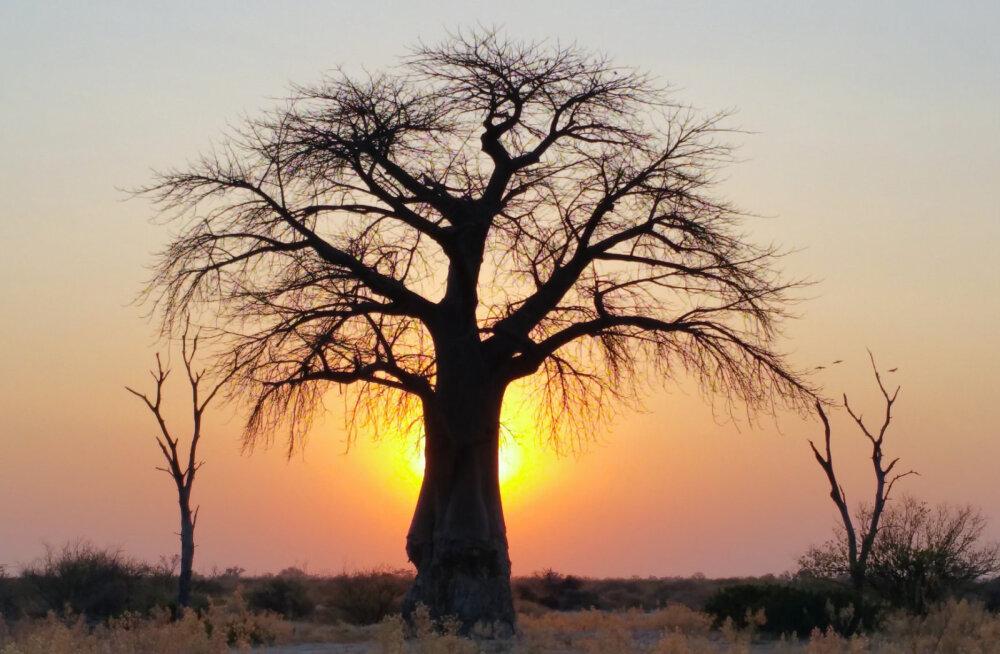 В Южной Африке ученые нашли затерянный город