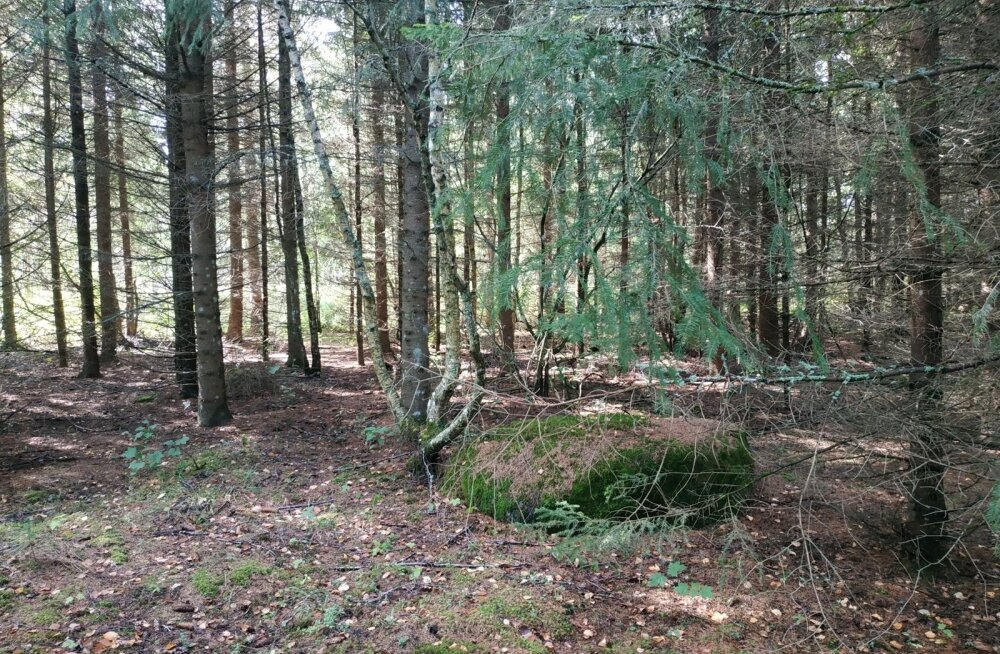 Ekskursioon 2018 parima metsamajandaja Lauri Salumäe metsas