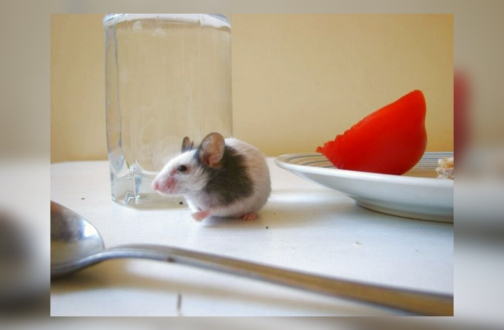 hiir, jaapani tantsuhiir