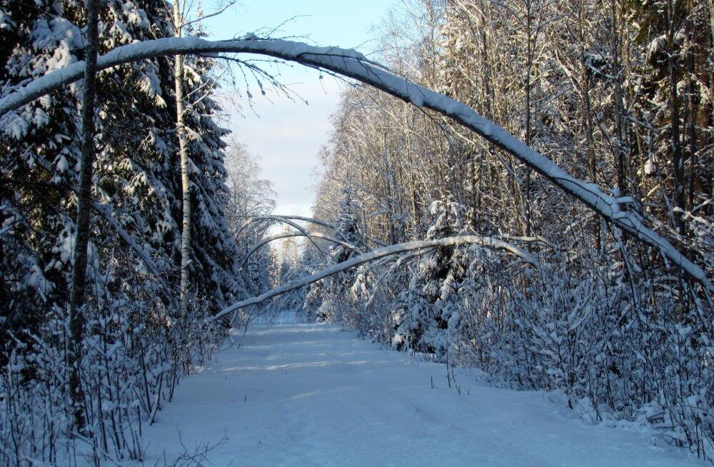 Leili metsalood | Lumine, tuuletu, päikseline, hääletu