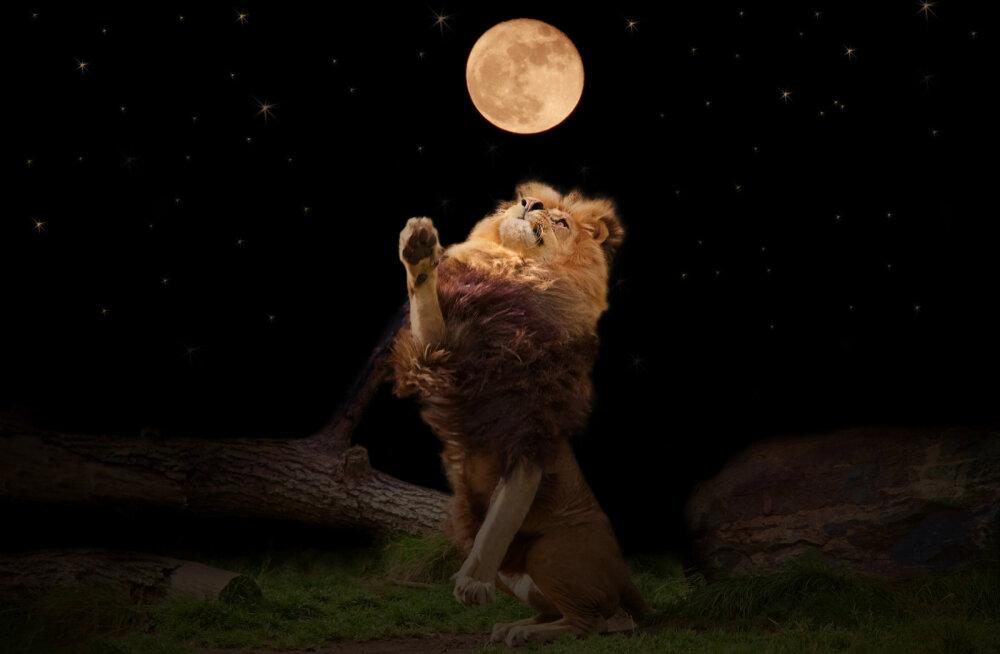 Jõulise mõjuga Lõvi sodiaagimärgi täiskuu toob kaasa emotsionaalse aja
