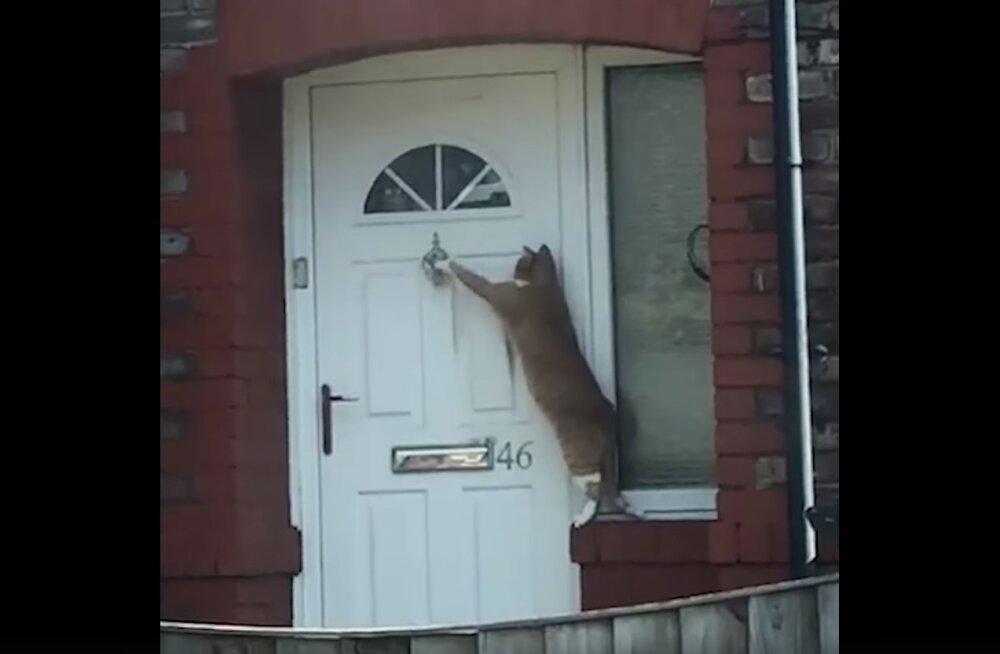 Naljakas VIDEO | Igal kassil on tuppa küsimiseks oma viis: millised trikid sinu kassil varuks on?