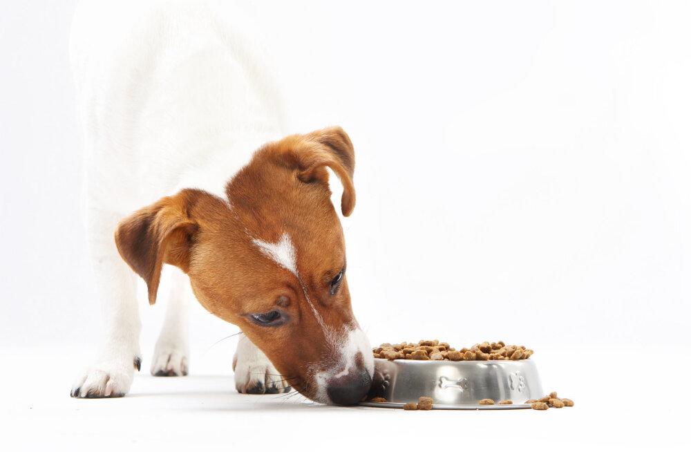 Kas ka meie lemmikloomade toidus ja vees on ohtlikke kemikaale?