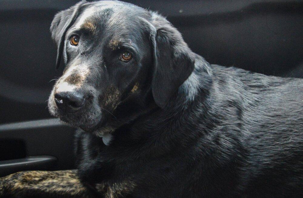 Пес спас 15-летнюю девочку, похищенную насильником