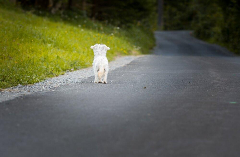Sügiseks maalt linna: märka abivajajat ja teata hüljatud loomadest