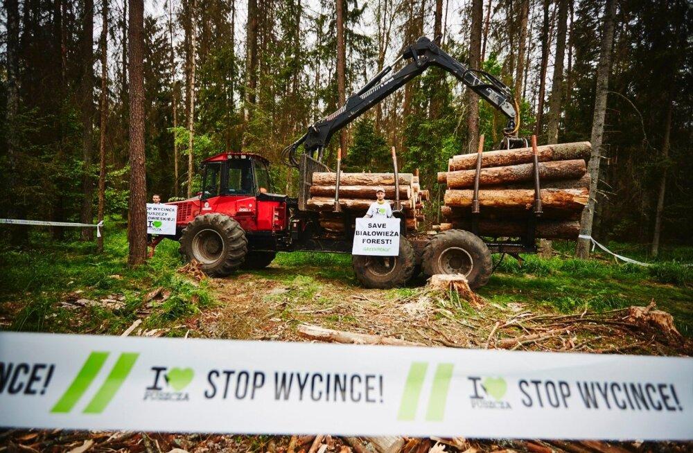 POLAND-ENVIRONMENT-FOREST-BIALOWIERZA
